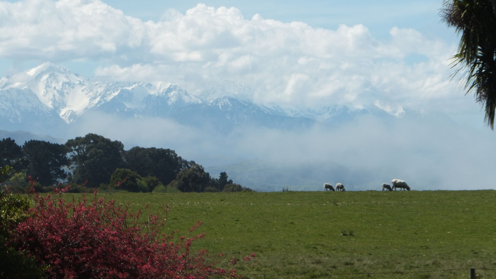 Kaikoura Mountains and House Paddock